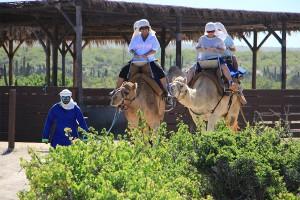cabo-camel1