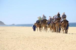 cabo-camel10