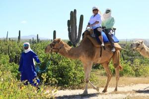 cabo-camel4