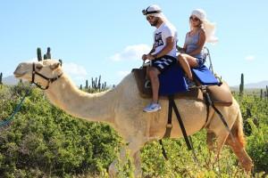 cabo-camel6